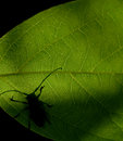 Bug on the leaf green Royalty Free Stock Photos