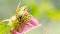 Bug life Royalty Free Stock Photo