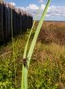 Bug on Plant Stalk Royalty Free Stock Photo