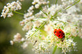 Bug sits on a flower Royalty Free Stock Images