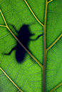 Bug stay on leaf Stock Photos