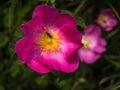Bug on a violet flower black pink Stock Photo