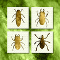 Bugs different type of Royalty Free Stock Images
