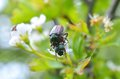 Bugs on leaf Royalty Free Stock Photo