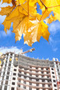 Building ander construction with yellow maples Royalty Free Stock Image