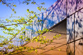 Building Facade With Tree And Shadows Royalty Free Stock Photo