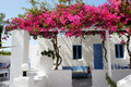 Building of hotel in traditional Greek style with Bougainvillea Royalty Free Stock Photo