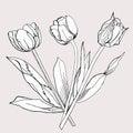 Bukiet tulip sketch czarny i biały Zdjęcie Royalty Free