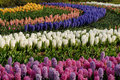 Bulb Flowers 4