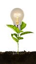 Bulb plant growing from soil on white background Royalty Free Stock Photography