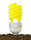 Bulb in soil Royalty Free Stock Image