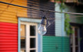 Bulb in a web old houses in caminito unique historical area and color architecture on street buenos aires travel across argentina Stock Photo
