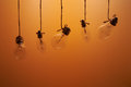 Bulbs hanging on laces on an orange background Royalty Free Stock Photo