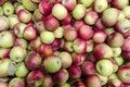 Bulk Apples in Bin Royalty Free Stock Photo