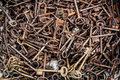 Bulk of retro brass keys for collection at garage sale Royalty Free Stock Photo