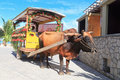 Bull carriage in Seychelles Stock Images