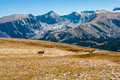 Bull elk on tundra mountains in background walking across rocky mountain national park colorado Royalty Free Stock Photography