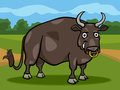 Bull farm animal cartoon illustration of funny comic Stock Photos