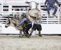 Bull rider trying to get his hand free Stock Photos