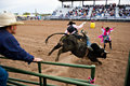 Bull riding Stock Photography