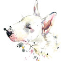 Bull Terrier dog T-shirt graphics. dog illustration with splash watercolor textured background. unusual illustration watercolor