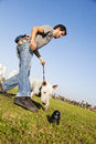 A bull terrier trying to reach the chew toy that his trainer had placed on the park s lawn Stock Images