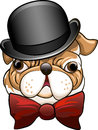 Bulldog in a bowler hat funny illustration with and bow tie drawn cartoon style Stock Photos
