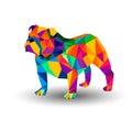 Bulldog english dog breed portrait illustration