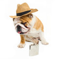 Bulldog english in straw hat and flask Stock Image