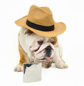 Bulldog english in straw hat and flask Stock Photography