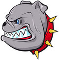 Bulldog Head Royalty Free Stock Image