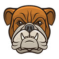 Bulldog Head Royalty Free Stock Photos