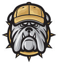 Bulldog head and baseball cap Royalty Free Stock Photography