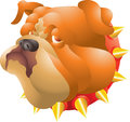 Bulldog head orange isolated illustration Stock Image