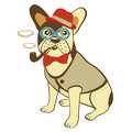 Bulldog smoking pipe in hat bow tie and glasses Stock Image