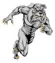 Bulldog sports mascot running a man character or charging sprinting or Royalty Free Stock Image