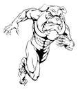Bulldog sports mascot running a man character or charging sprinting or Stock Photography