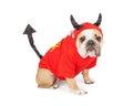 Bulldog Wearing Halloween Devil Costume Royalty Free Stock Photo