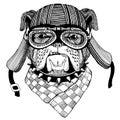 Bulldog Wild animal wearing biker motorcycle aviator fly club helmet Illustration for tattoo, emblem, badge, logo, patch