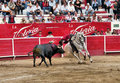 Bullfight on Horse Stock Image