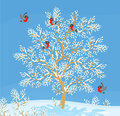 Bullfinches flock of red on a snow covered tree Royalty Free Stock Image