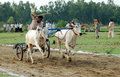 Bullock cart racing Royalty Free Stock Photo