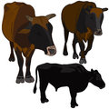 Bulls set Royalty Free Stock Images