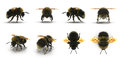 The Bumblebee or Bumble Bee Bombus terrestris isolated renders set from different angles on a white. 3D illustration Royalty Free Stock Photo