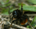 Bumblebee in funny pose yeah,baby Royalty Free Stock Photo