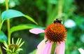 Bumblebee Success And Purple C...