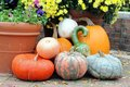 Bumpy gourd and pumpkin on the ground Stock Image