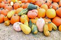 Bumpy gourd and pumpkin on the ground Royalty Free Stock Images