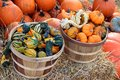 Bumpy gourd and pumpkin at market place for halloween and harvest season Stock Photo