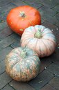 Bumpy pumpkin on the yard for halloween in dark evening focus on frist Royalty Free Stock Photos